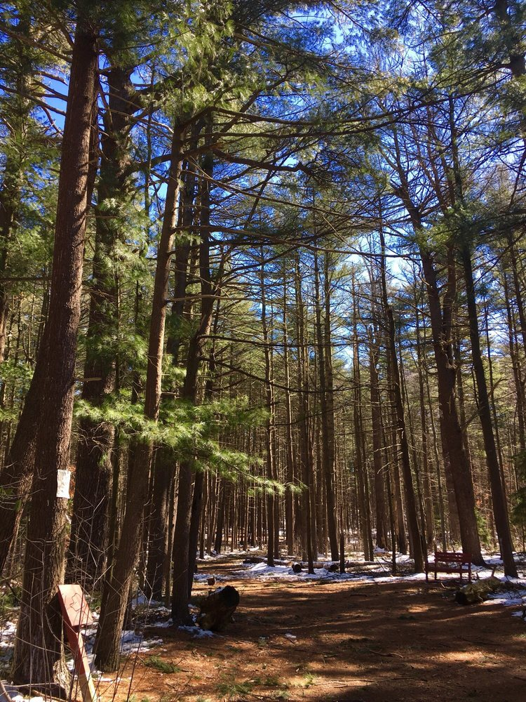 Prosser Pines Nature Preserve: Yaphank-Middle Island Rd, Middle Island, NY