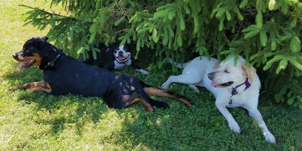 Laura's Loving Pet Sitting / Walking Services: 1168 Charles St, Monaca, PA