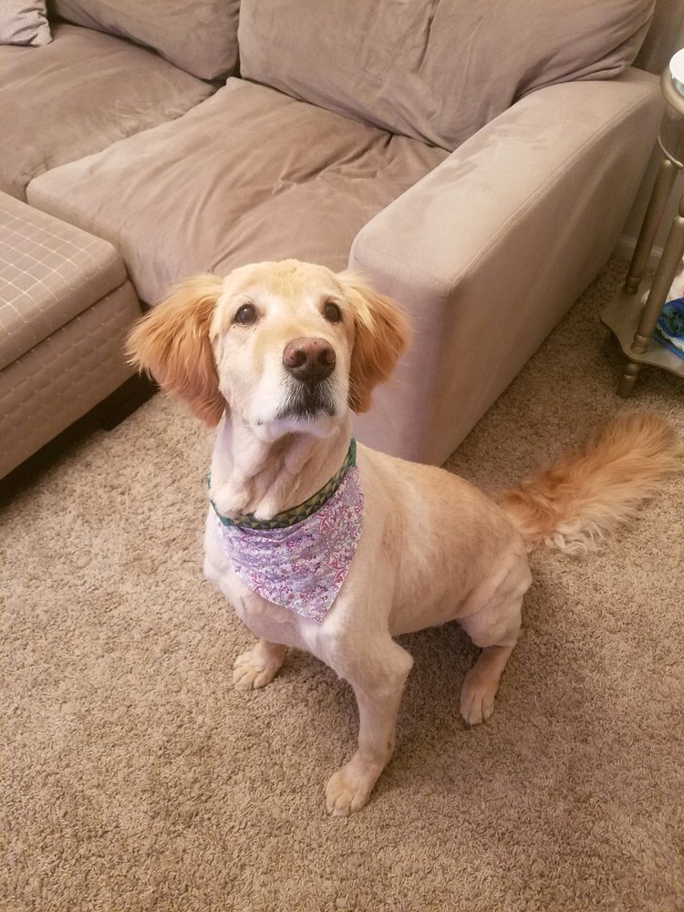 A Bark and A Wag Grooming Salon: 102 W Elm St, Fayetteville, NY