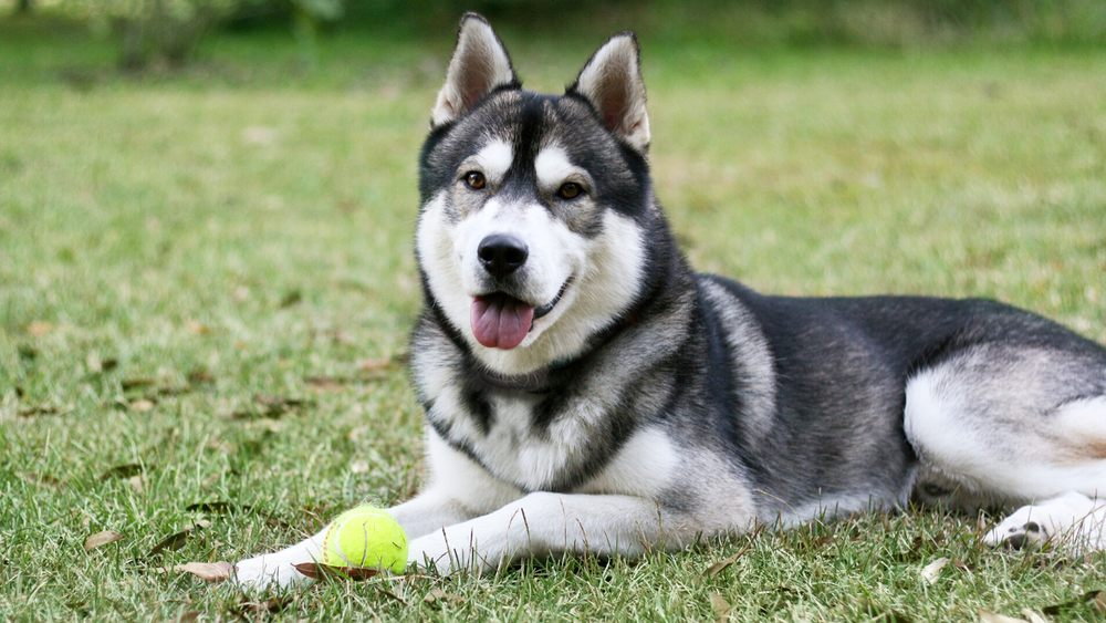 DogWatch of Spokane and Northern Idaho: Post Falls, ID