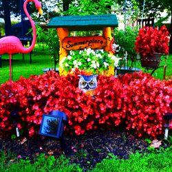 garden center louisville ky. Photo Of Wallitsch Garden Center - Louisville, KY, United States. Our Begonias Louisville Ky A