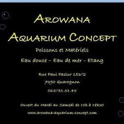 arowana aquarium concept aquariophilie rue paul pastur 153 2 quaregnon hainaut num 233 ro de