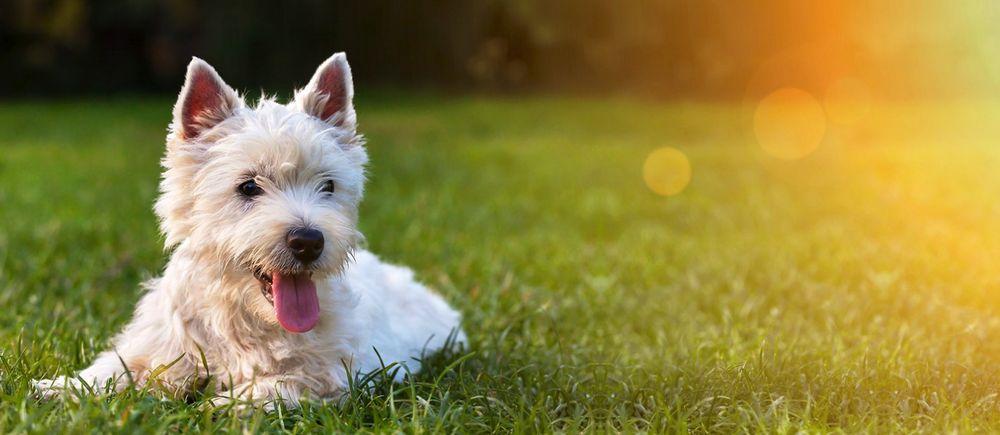 Howie's Happy Dog Training: Ashland, MO