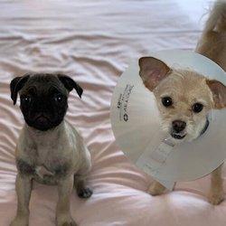Hunter Animal Hospital - 17 Reviews - Veterinarians - 5246 W 3500th