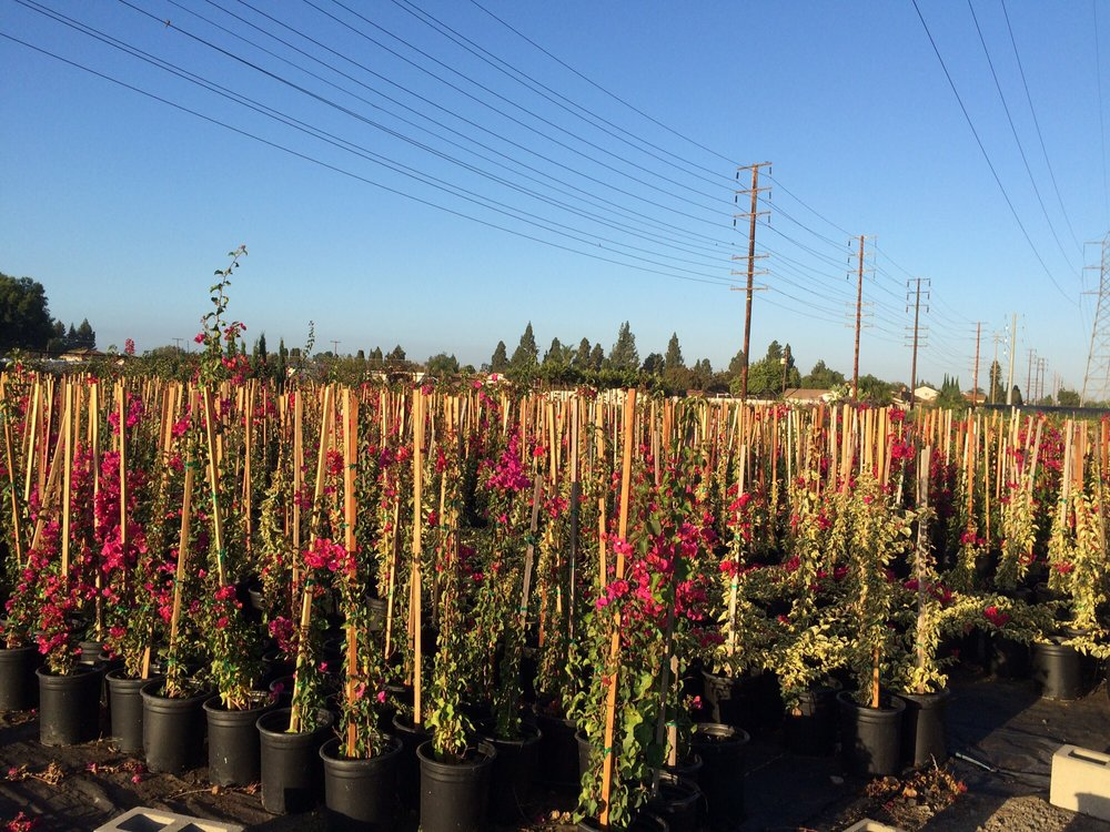 Cerritos Nursery: 19820 Norwalk Blvd, Cerritos, CA