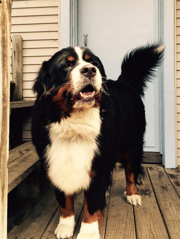 Clara's Canine Care: Humboldt Park, Chicago, IL