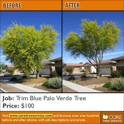 Photo Of Core Tree Service Glendale Az United States Native Palo Verde