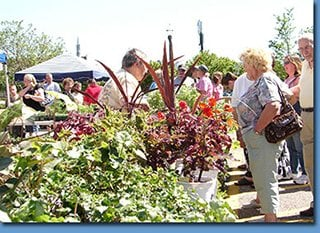 City of Wayne Farmers Market: 35310 W Michigan Ave, Wayne, MI
