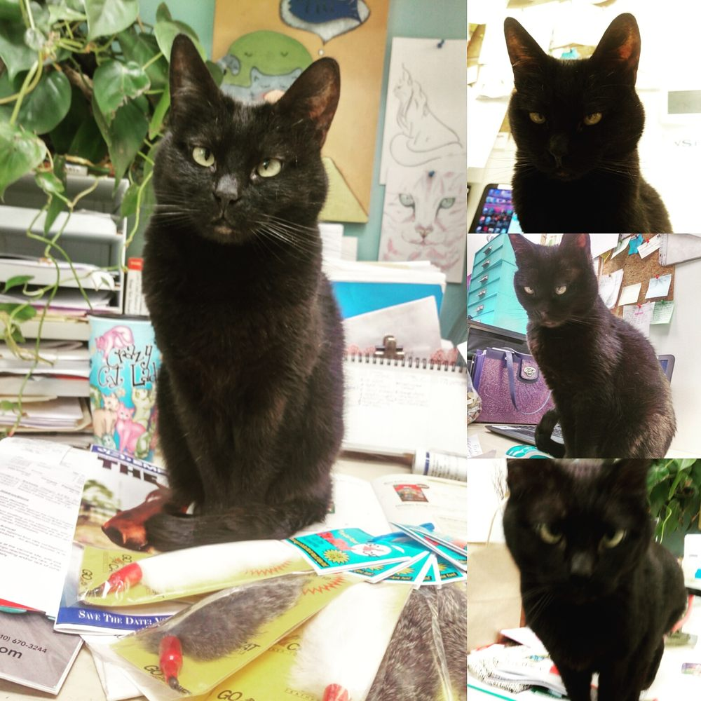 Photo Of The Whole Cat And Kaboodle Kirkland Wa United States
