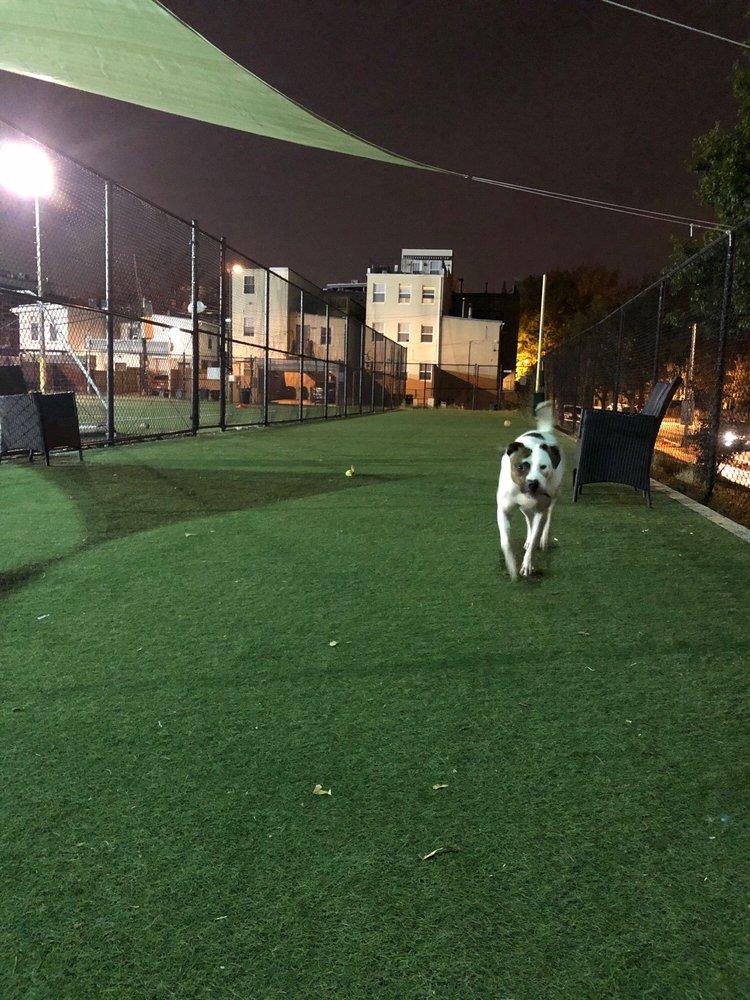 Bundy Dog Park: 470 P St NW, Washington, DC, DC