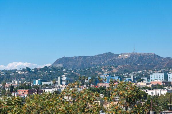 Amy Pezeshki 6380 Wilshire Blvd Ste 1006 Los Angeles CA Real Estate