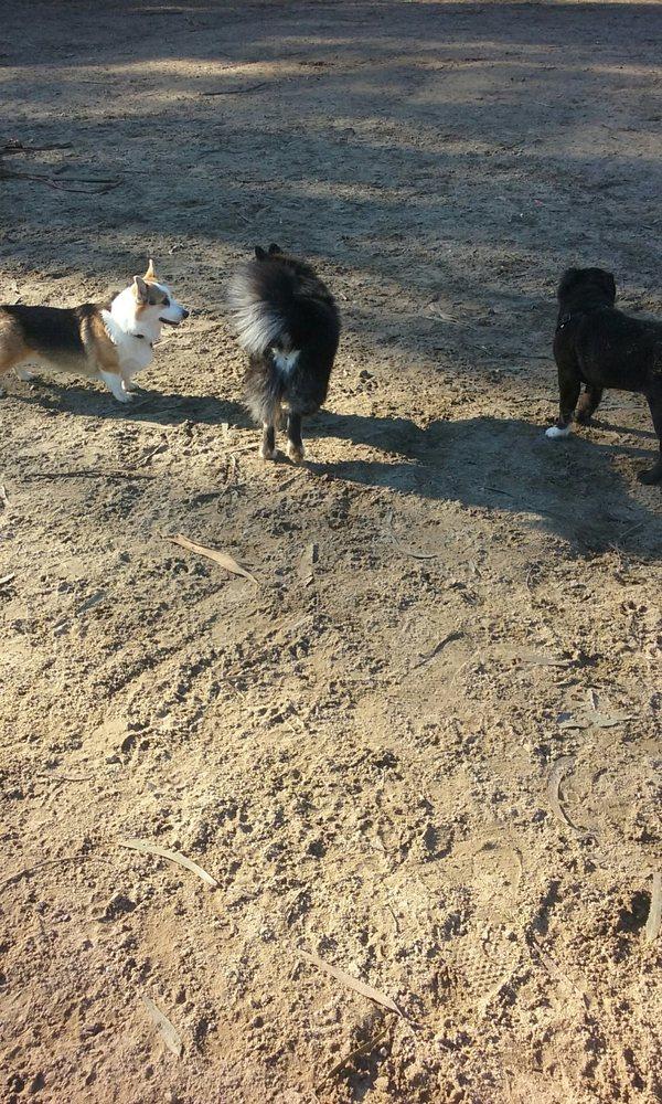 Dog Park San Francisco Yelp