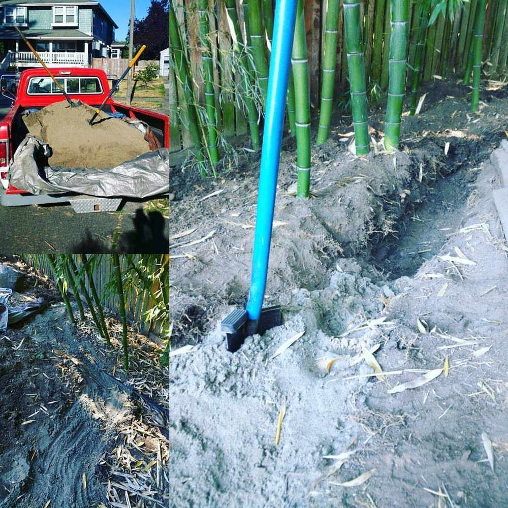 American Bamboo: Seattle, WA