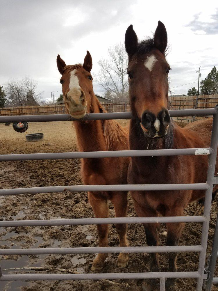 Healing Hands Horsemanship: Gardnerville, NV