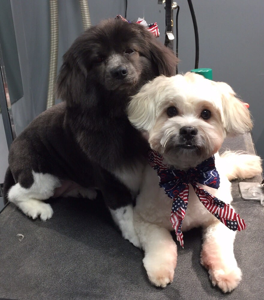 Lexi and jack freshly groomed for their trip to the horse show yelp photo of dirty dogs self service dog wash and grooming greensboro nc united solutioingenieria Choice Image
