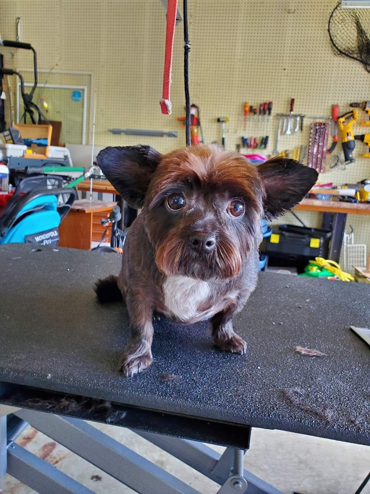 Classy Canines Pet Sitting and Grooming: 3316 Glenmore Ave, Cincinnati, OH