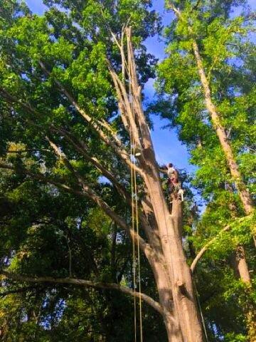 Carolina Tree Management: Kings Mountain, NC
