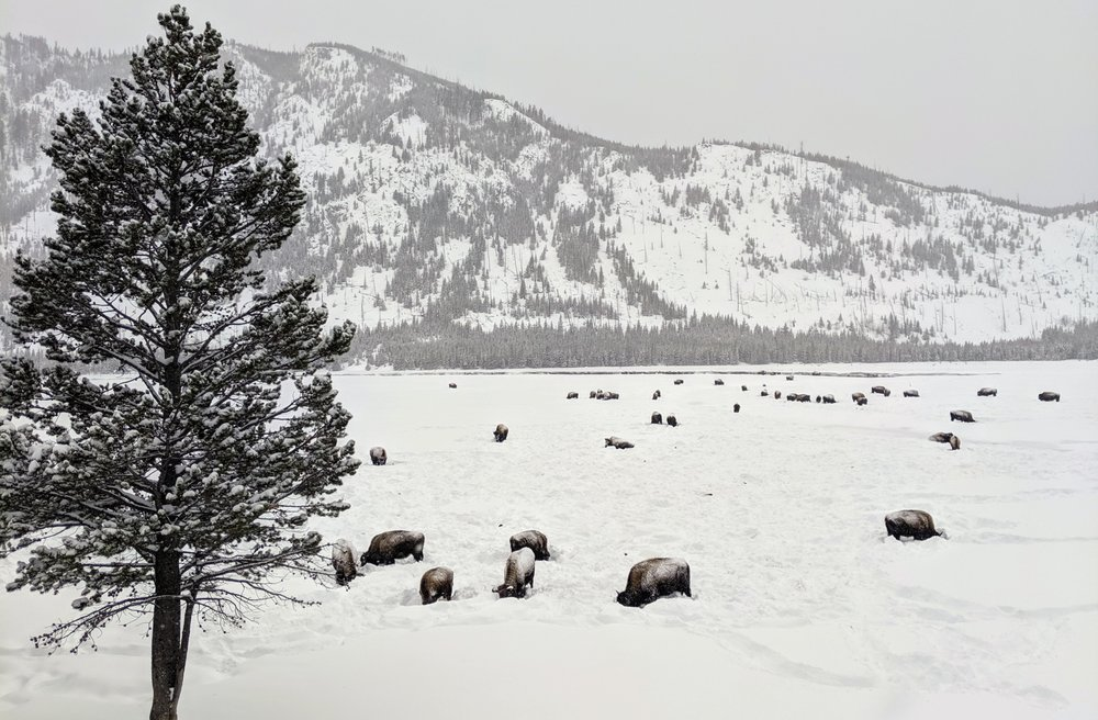 Back Country Adventure Snowmobile Rentals: 224 Electric St, West Yellowstone, MT