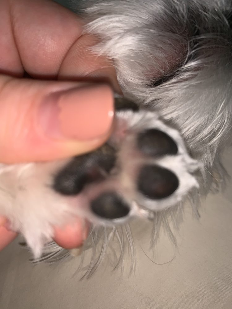Petapoluza Pet Supply & Grooming