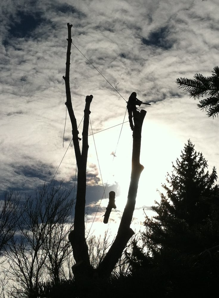 Roots & Shoots Tree Care: Boulder, CO