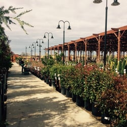 Photo Of Green Acres Nursery Supply Rocklin Ca United States Trees