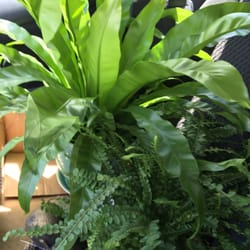 Photo Of Old Country Gardens   Wilmington, DE, United States. Pretty House  Plants