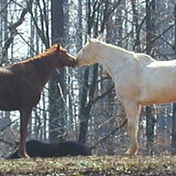 Northwind Equestrian Center Horseback Riding 1768 Newt