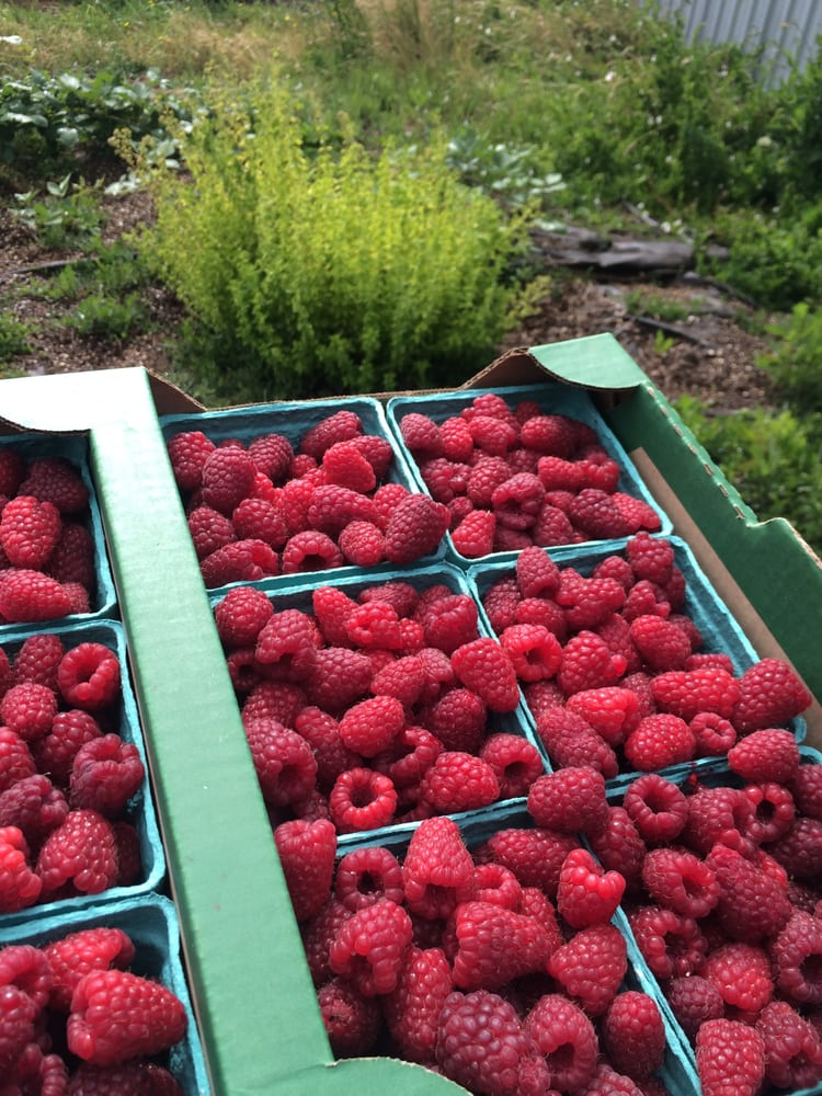 Grandpa's Fresh Market: 36483 Highway 226 SE, Albany, OR