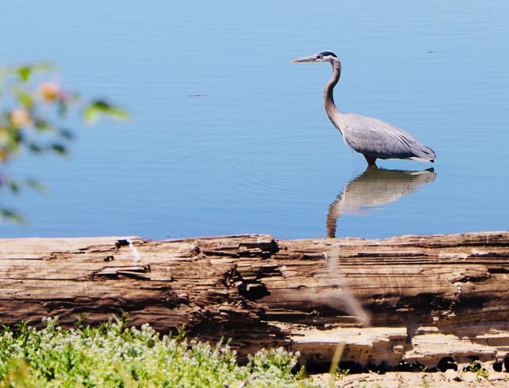 Fernhill Wetlands: 1924 Council St, Forest Grove, OR