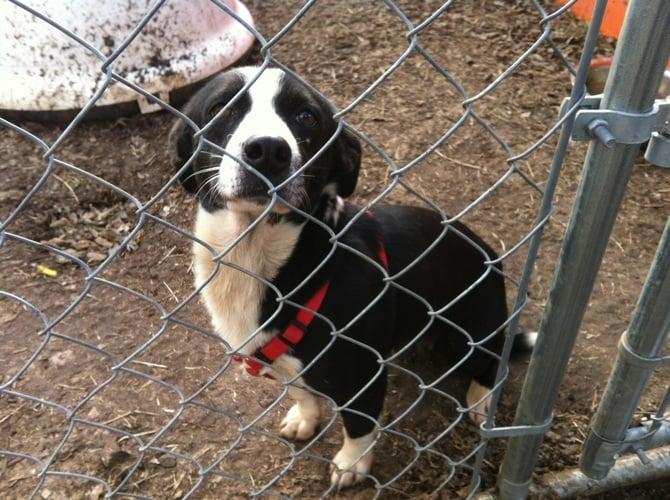 Dog Adoption Austin Near Me