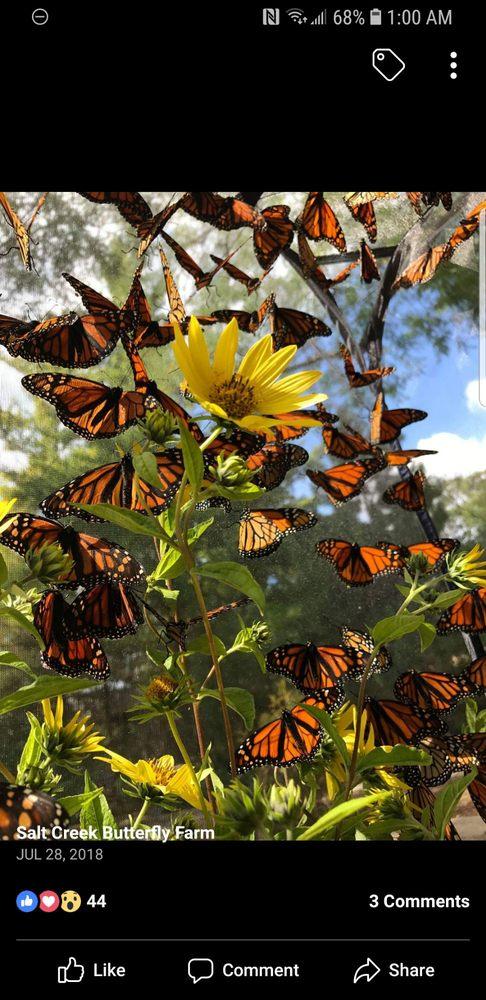 Salt Creek Butterfly Farm: Western Springs, IL