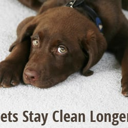 Heaven S Best Carpet Cleaning Wilmington 20 Photos