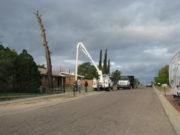 Arizona Tree & Landscape Service: 3381 E Michigan St, Tucson, AZ