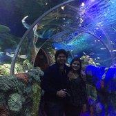 Sea Life Charlotte Concord Aquarium 138 Photos 62