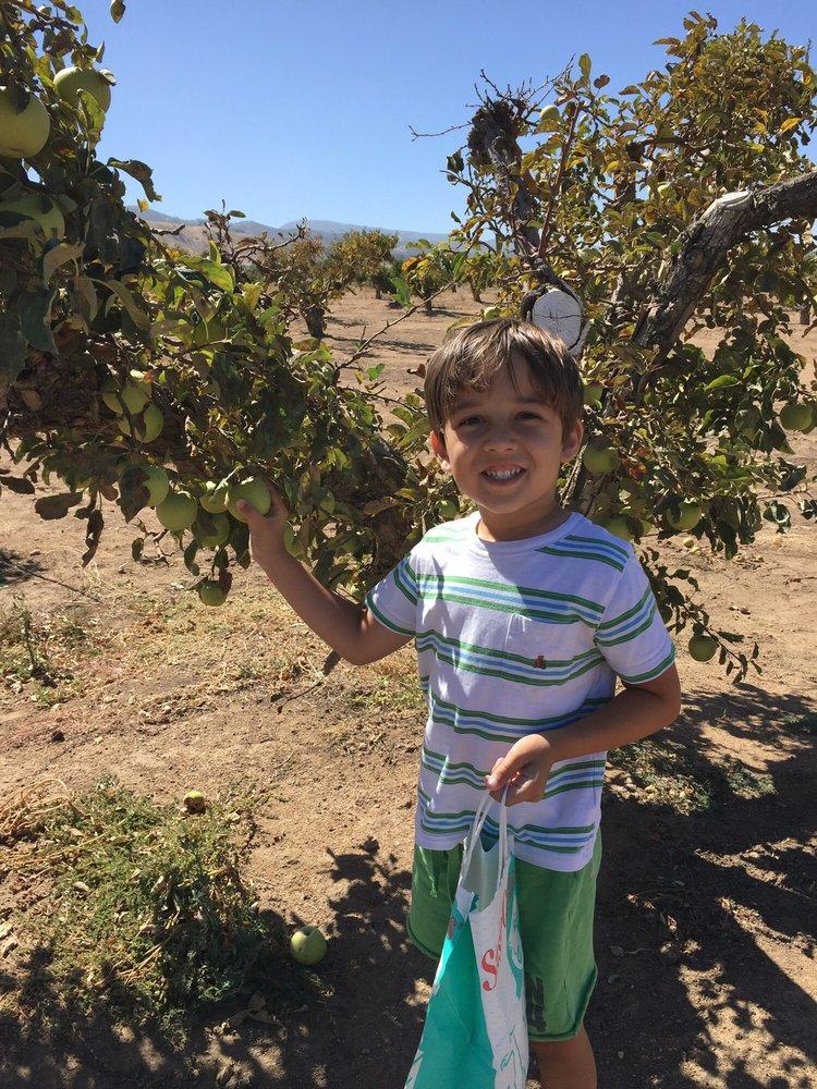 Knaus Apple Picking