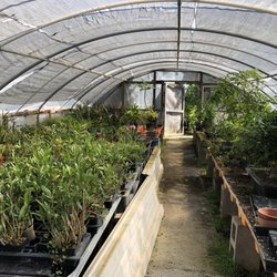 Photo Of Maruyama Bonsai Nursery Sacramento Ca United States They Have Orchids