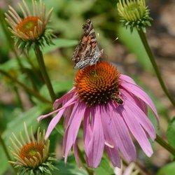beech hollow wildflower farm nurseries gardening 1575 elberton