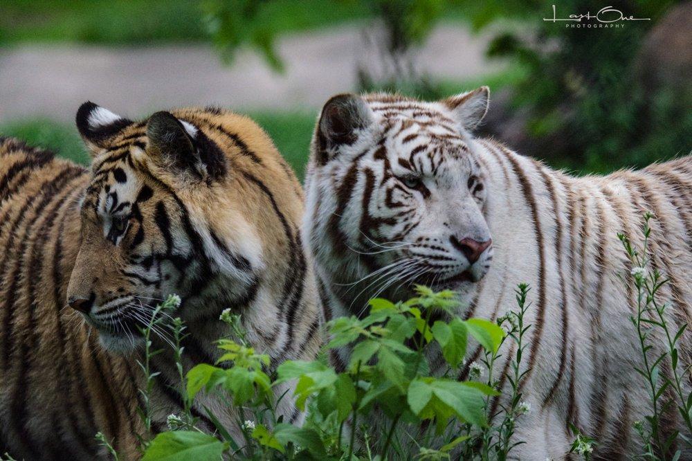 Pine Grove Zoo: 1200 W Broadway, Little Falls, MN