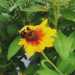 Photo Of Heartland Nursery Kansas City Mo United States Hiest Bee In