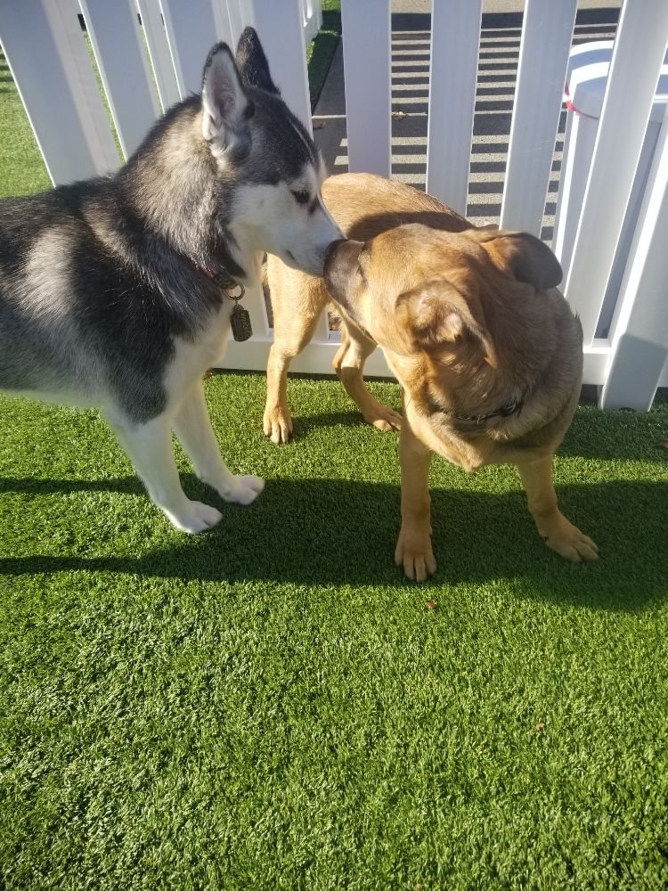 All Access Doggy Daycare: 18823 S Pacific Ave, Spanaway, WA
