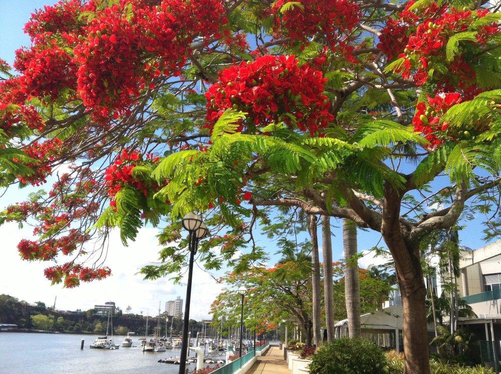 CityHopper: 1A Creek St, Brisbane, QLD