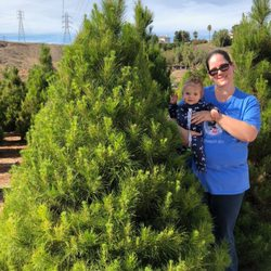 Photo Of Christmas Conifers Colton Ca United States Our 2018 Xmas Tree