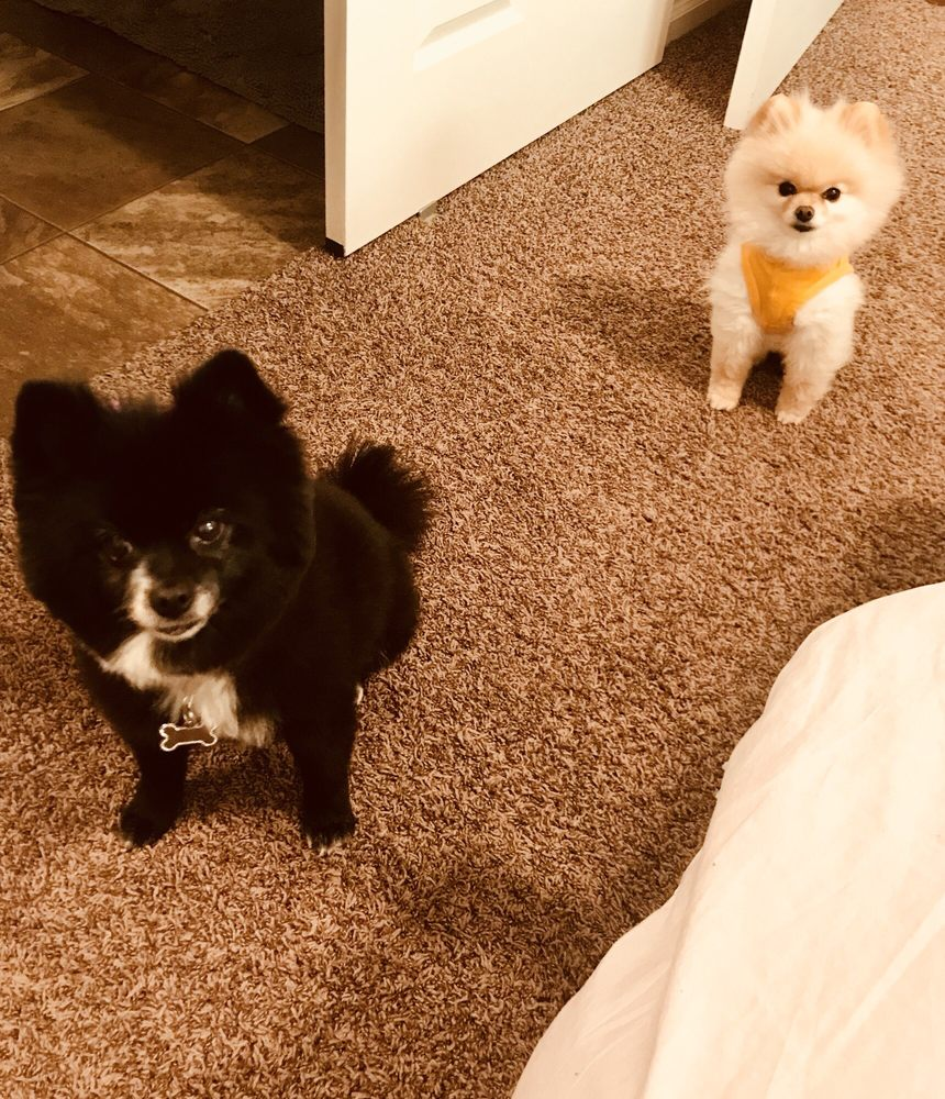 Pets of Perfection