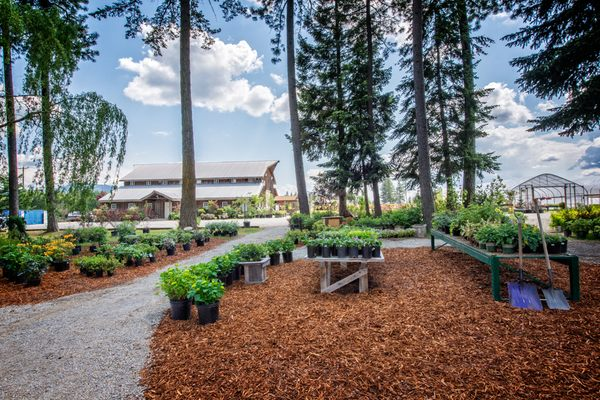 New Leaf Nursery 12655 N Government Way Hayden Id Tree Services Mapquest