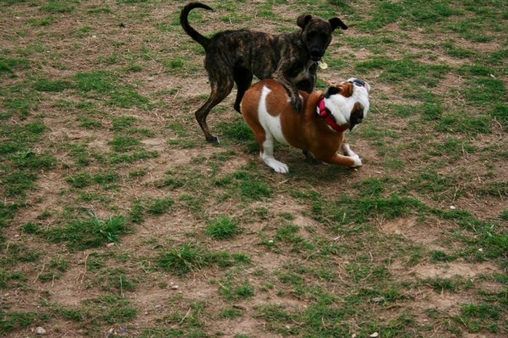 H.O.T. Dog Park: 4900 Steinbeck Bend Rd, Waco, TX