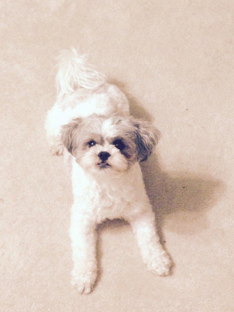 My Pets Comfort: Conshohocken, PA