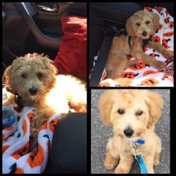 The Best 10 Pet Groomers In Rochester Ny Last Updated January