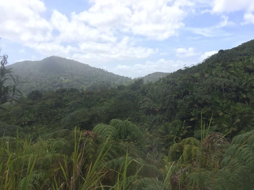 Toro Negro Forest: 1221 Pinero Avenue, San Juan, PR
