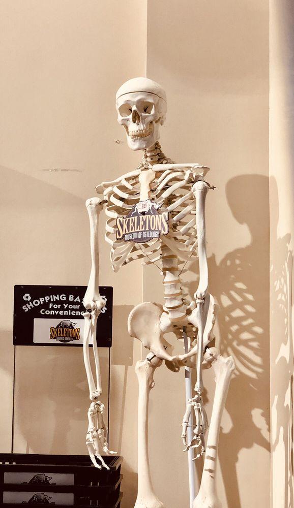 Skeletons: Museum of Osteology: 8441 International Dr, Orlando, FL
