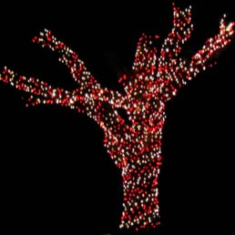 photo of dfw christmas lights garland tx united states park cities christmas - Christmas Light Garland